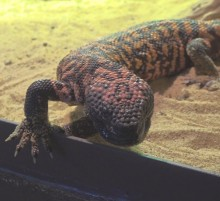 Jaster zoo