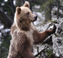 Les bez Medveda je chudobnejsi