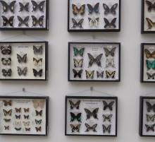 rep tropicky hmyz.mpg snapshot 01.47 2020.11.25 10.30.00